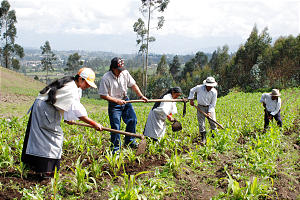 Bishop Milton Yamberla of the Pucara Ward, second from left, and his wife, Graciela Yamberla, left, cultivate fields on the slopes of Mt. Imbabura. With help from the Benson Institute, the Yamberlas learned to raise crops.