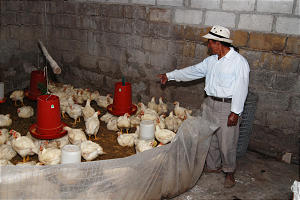 Alberto Yamberla, patriarch in the Imbabura Ecuador Stake, points to the chickens used by his family as a source of protein in their diet.
