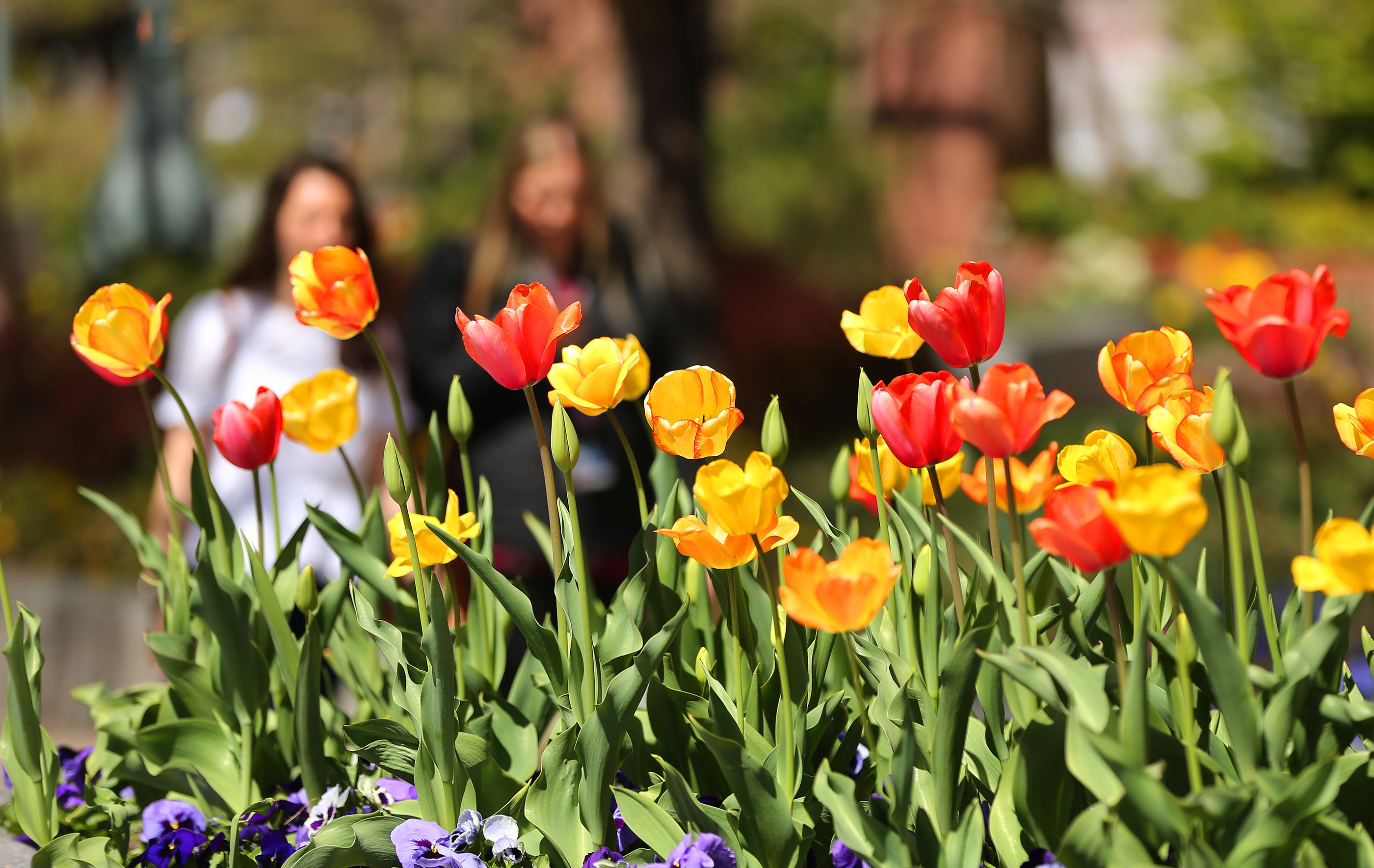 Visitors walks past flowers on the grounds of the Salt Lake Temple in Salt Lake City on Friday, April 19, 2019.