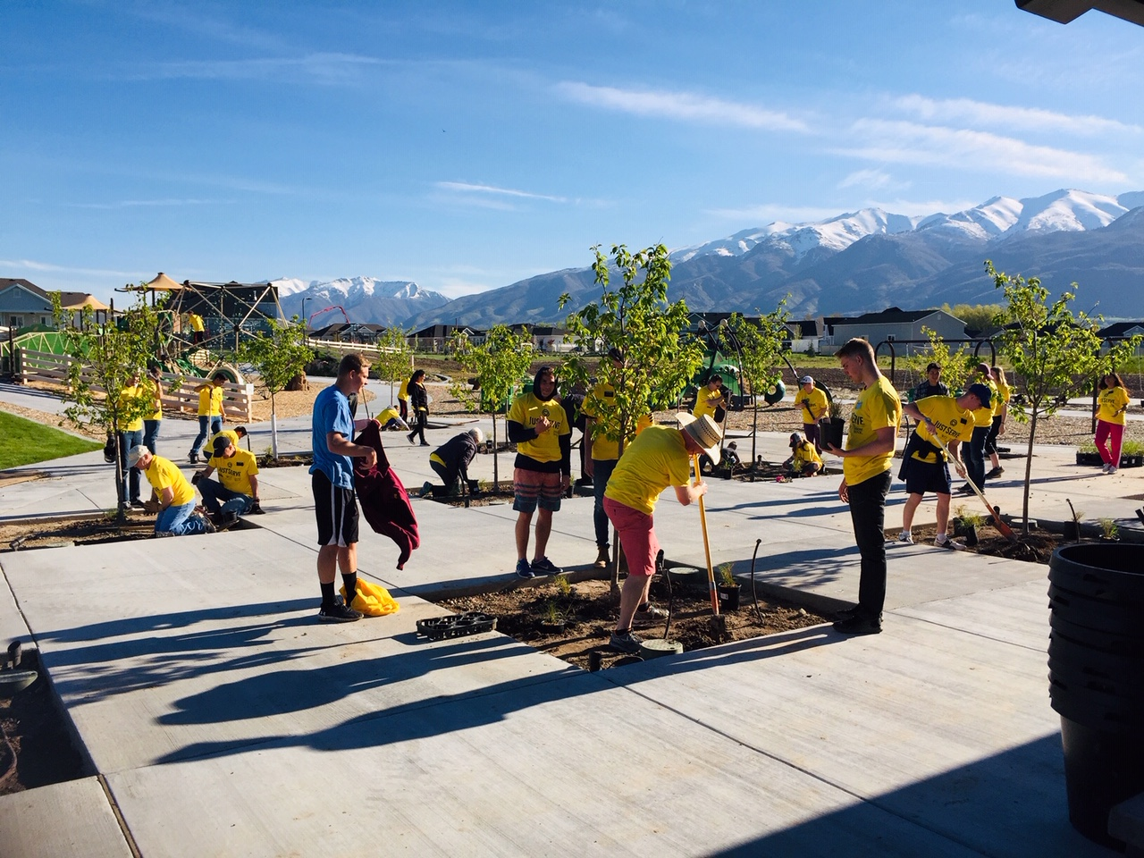 JustServe volunteers plant trees at a park in the City of Kaysville as part of the Salt Lake Bees/JustServe day of service on April 27.