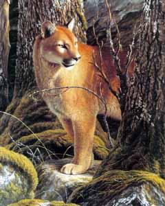 Puma, byt Oscar Campos