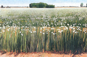"""Gary Ernest Smith's """"Field of Onions."""""""