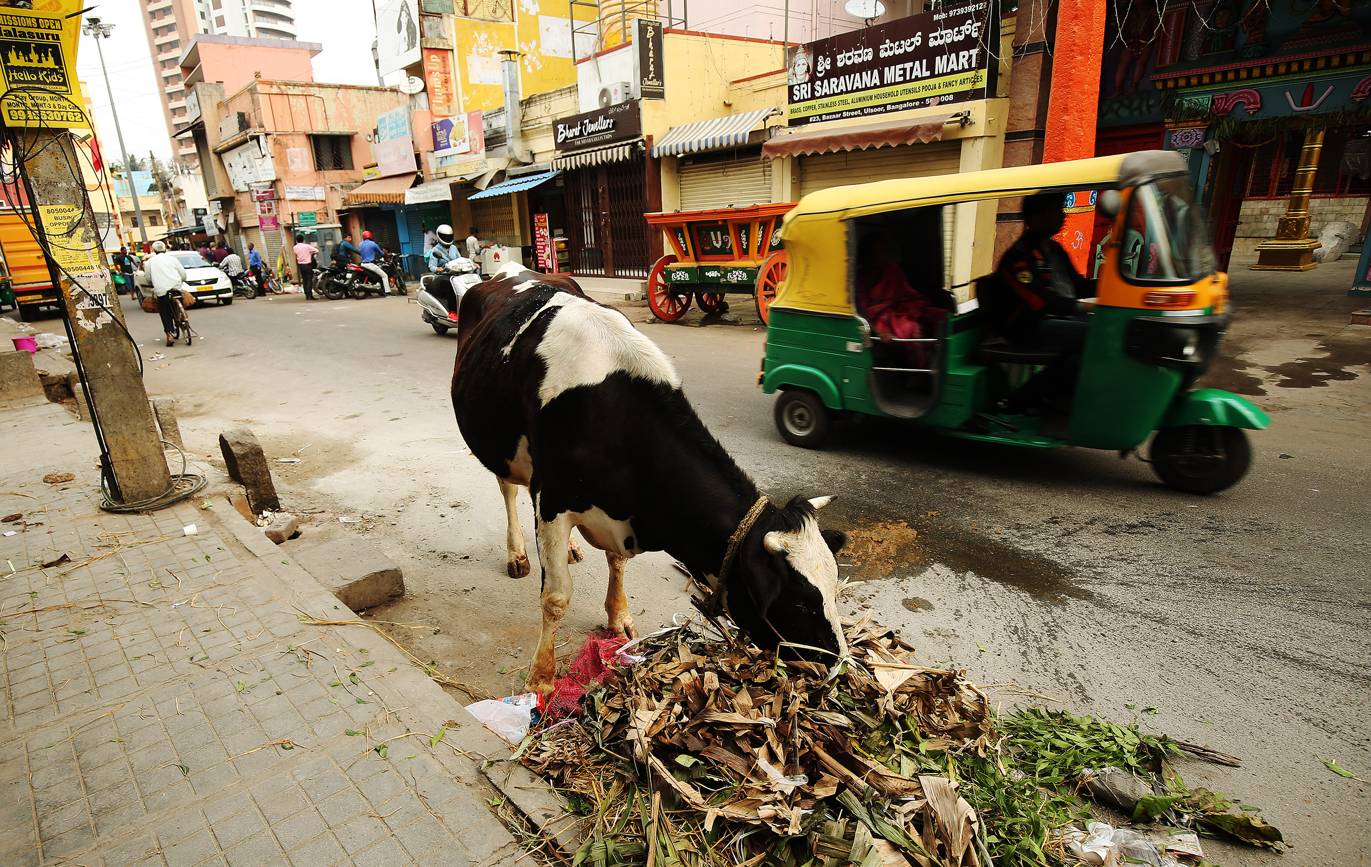 A cow eats in a street in Bengaluru, India, on Thursday, April 19, 2018.