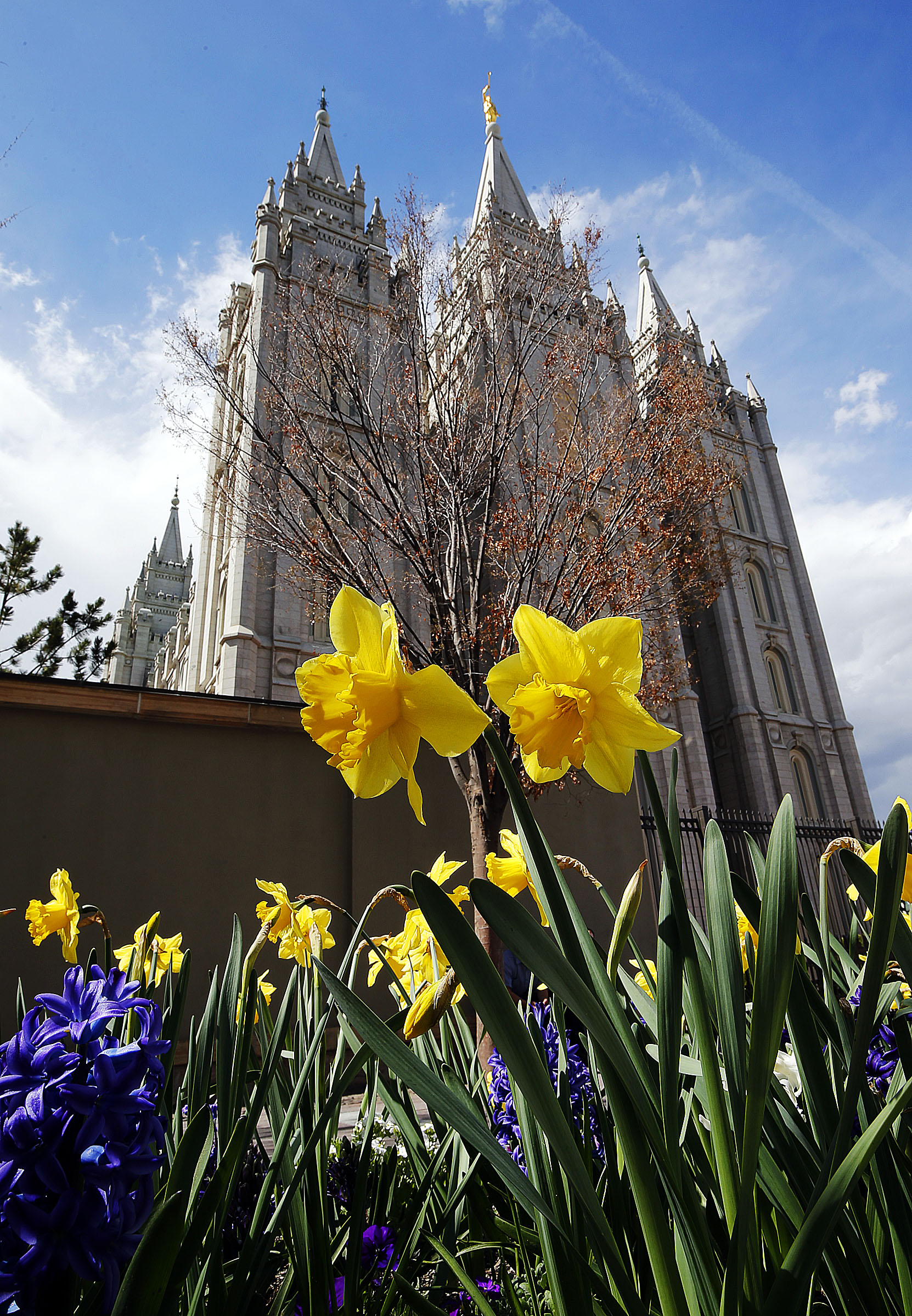 Flowers bloom on the Main Street Plaza in Salt Lake City on Friday, April 5, 2019. In the background is the Salt Lake Temple of The Church of Jesus Christ of Latter-day Saints.