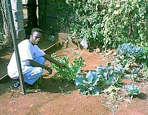 Freeman Maseko shows the garden he started at home.