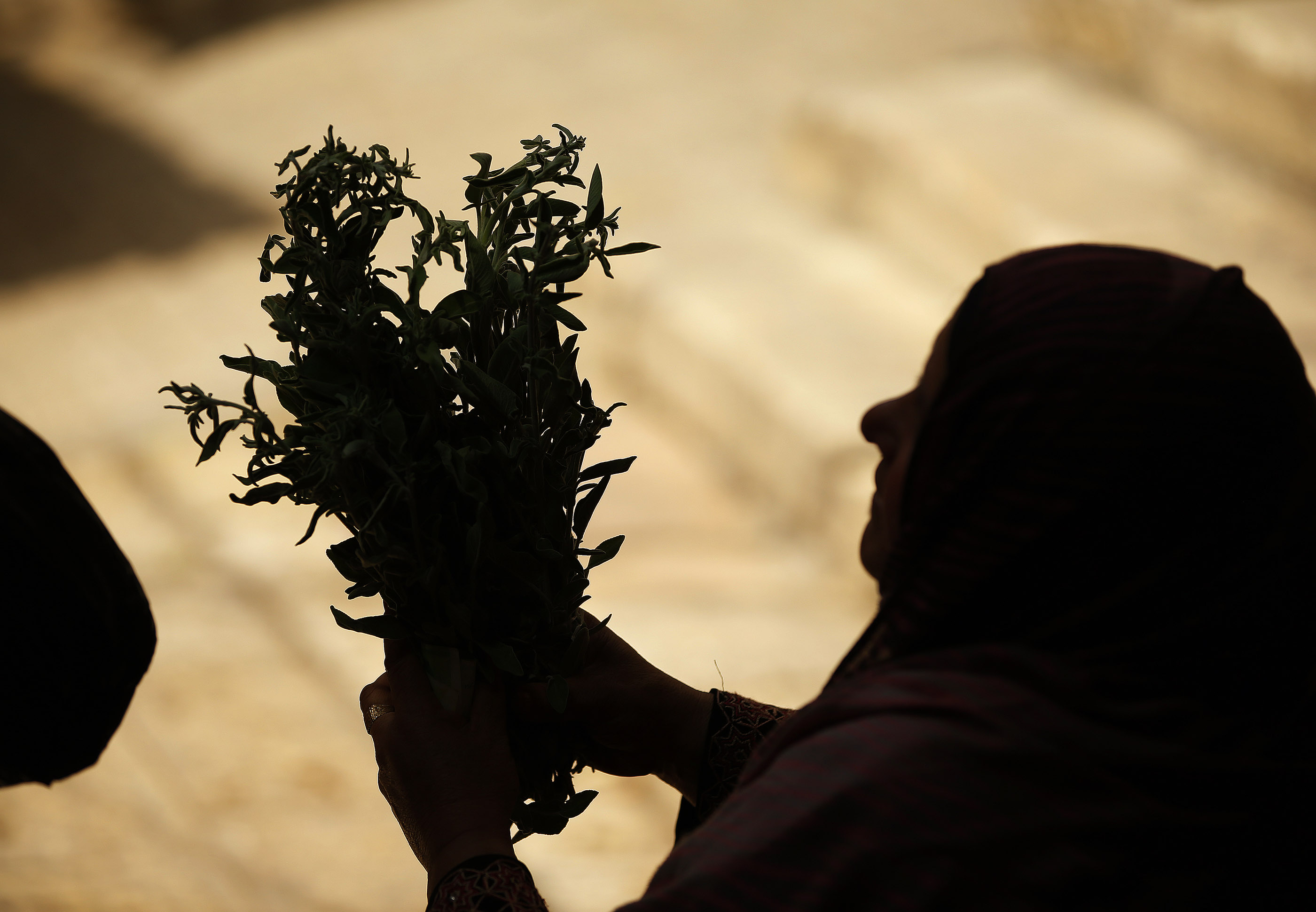 Sage is sold at the Old City market in Jerusalem on Friday, April 13, 2018.