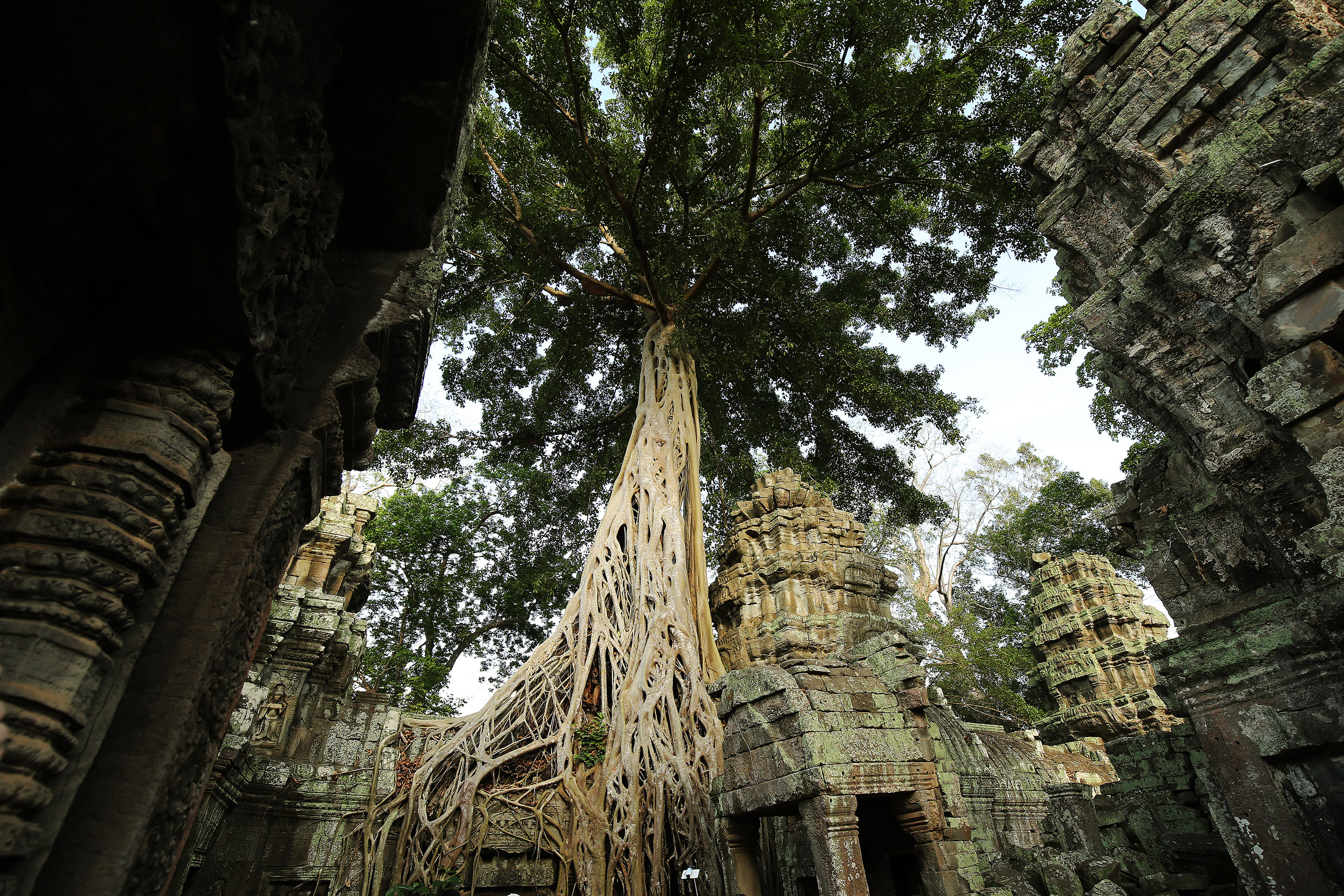 Trees grow around a temple at Angkor Wat in Cambodia on April 28, 2018. Angkor Wat is a 12th century temple complex in Cambodia and the largest religious monument in the world.