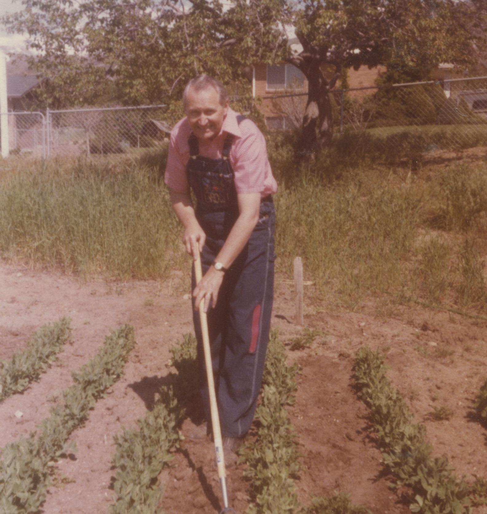 Elder L. Tom Perry hoes in his garden in Bountiful.