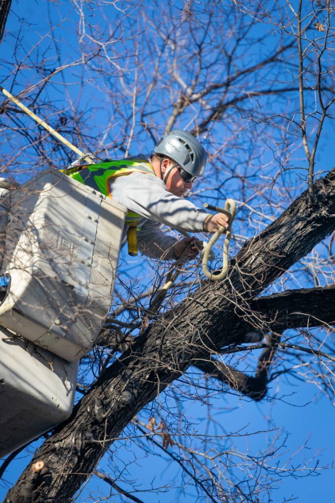 A crew member works on a tree to give construction crews access to excavate around the Salt Lake Temple for a major renovation.