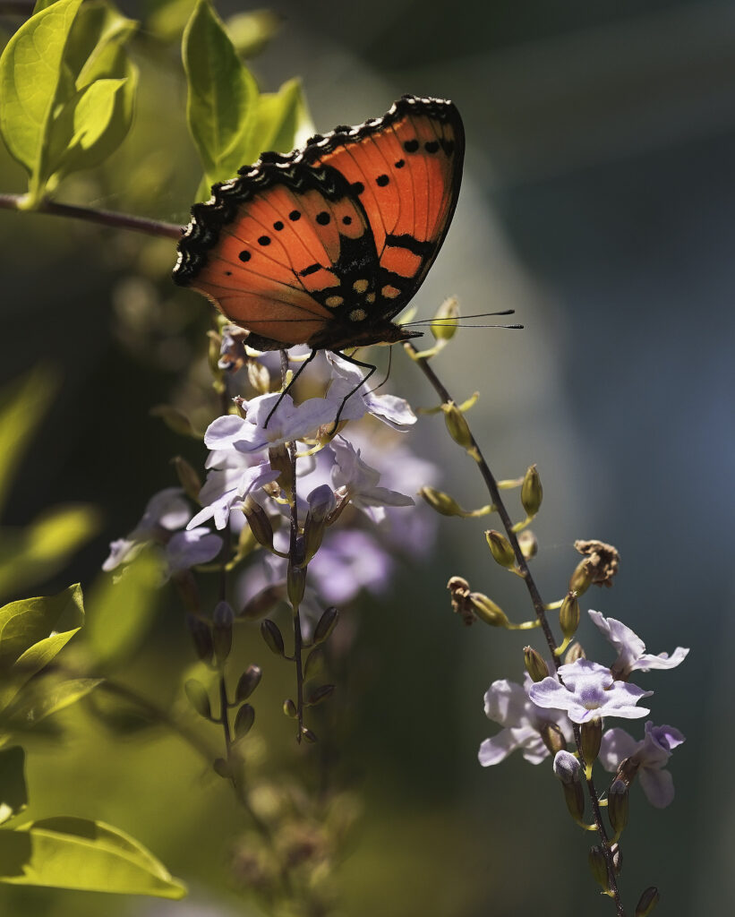 A butterfly in Umlazi, South Africa, on Feb. 14, 2020.