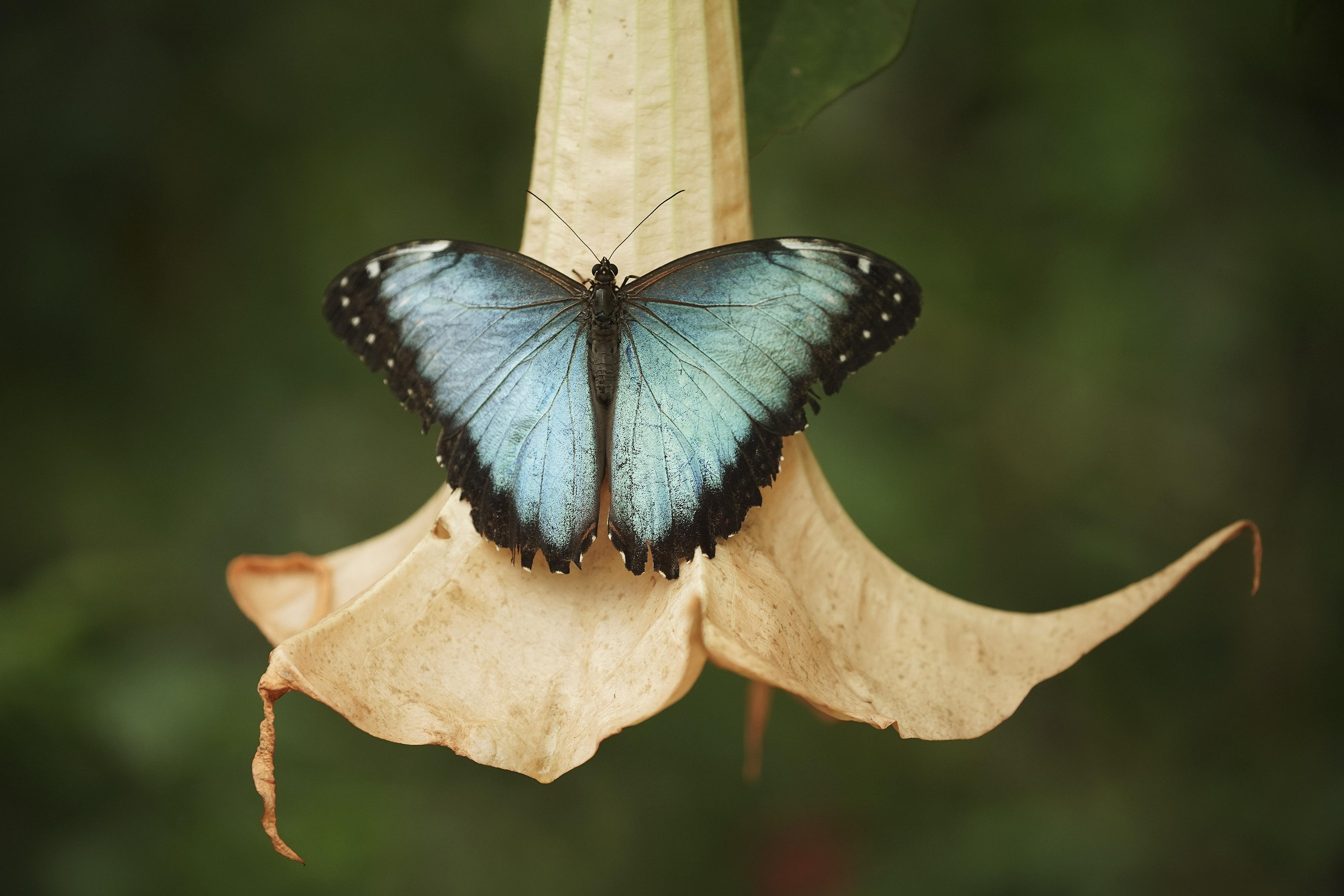 Una mariposa se posa en una flor cerca del lago de Atitlán, Guatemala, el lunes 19 de agosto de 2019. El presidente Russell M. Nelson, de La Iglesia de Jesucristo de los Santos de los Últimos Días, habló en un devocional el sábado 24 de agosto en un devocional en la Ciudad de Guatemala.