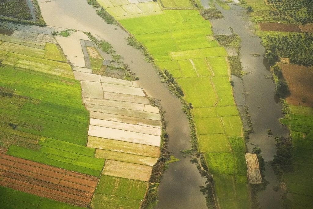 Los cultivos crecen entre los ríos en Nom Pen, Camboya, el 19 de noviembre de 2019.