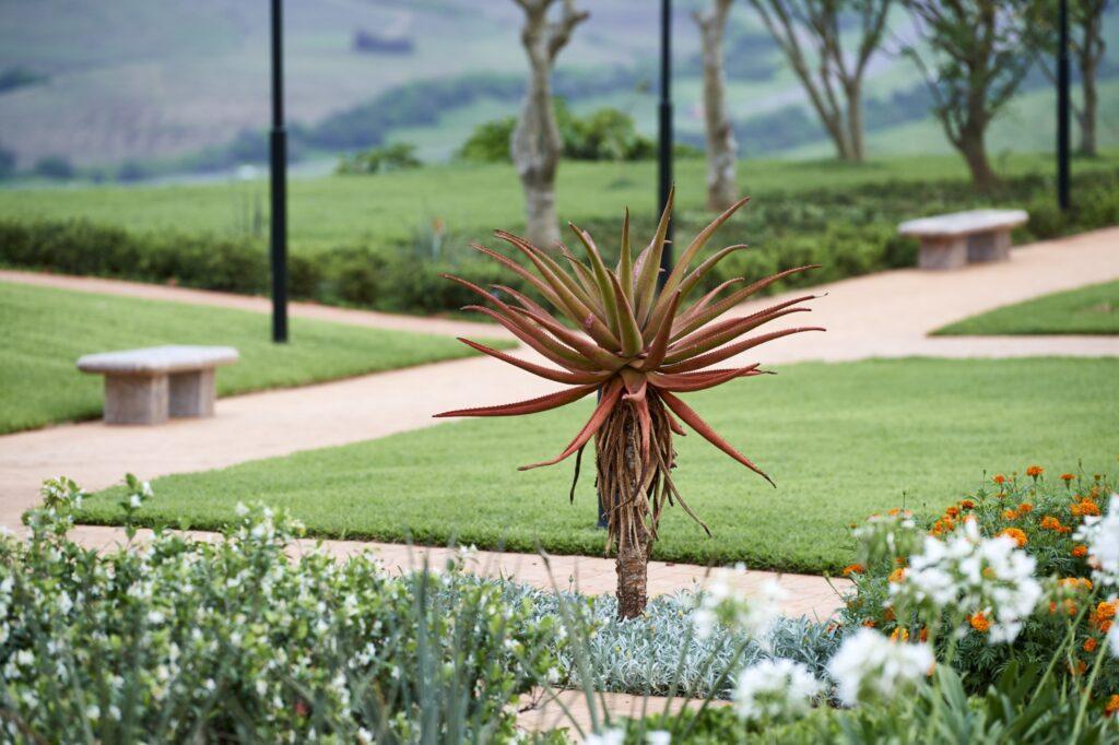 En todo el terreno del Templo de Durban, Sudáfrica hay hermosas plantas, flores y árboles.